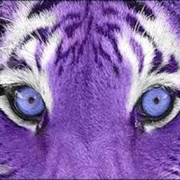 purple_tiger